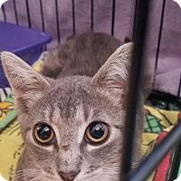 Adopt A Pet :: Stellaluna - Staten Island, NY