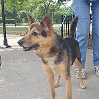 Adopt A Pet :: Cuba - Barrington Hills, IL