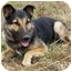 Photo 3 - German Shepherd Dog/Collie Mix Dog for adoption in Los Angeles, California - Logan von Lansing - SWEETIE!