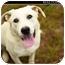 Photo 2 - Labrador Retriever Mix Dog for adoption in Monroe, Georgia - Casper