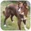 Photo 2 - Border Collie Dog for adoption in San Pedro, California - COLA