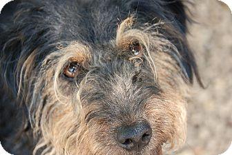 Terrier (Unknown Type, Medium) Mix Dog for adoption in Philadelphia, Pennsylvania - Edmund