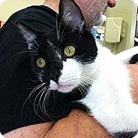 Adopt A Pet :: George - Riverhead, NY