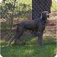 Adopt A Pet :: Beau  ** ADOPTED ** - Eustis, FL