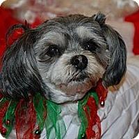Adopt A Pet :: Mogway - Ogden, UT