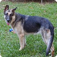 Adopt A Pet :: Asher - Green Cove Springs, FL