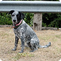 Adopt A Pet :: Soot - Weatherford, TX