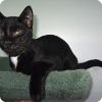 Adopt A Pet :: Chandler - Powell, OH