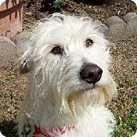Adopt A Pet :: J Matthew - Lafayette, LA
