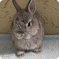 Adopt A Pet :: Sterling - Bonita, CA