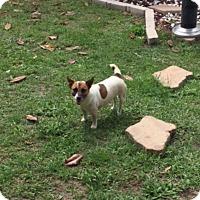 Adopt A Pet :: Miss Sparta in Houston - Houston, TX