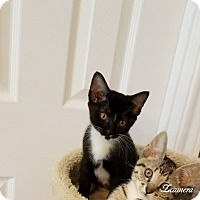 Adopt A Pet :: SOX - Houston, TX