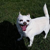 Adopt A Pet :: Pedro - Port Clinton, OH