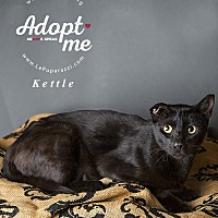 Adopt A Pet :: Kettle - Oviedo, FL