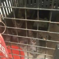 Adopt A Pet :: 35892028 - West Monroe, LA