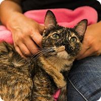 Adopt A Pet :: Zuli - Marina del Rey, CA