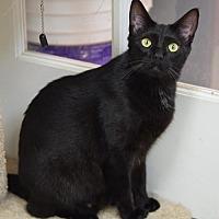 Adopt A Pet :: Nidarina - DFW Metroplex, TX