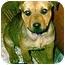 Photo 2 - German Shepherd Dog/Rottweiler Mix Puppy for adoption in dewey, Arizona - Angie