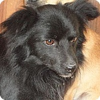 Terrier (Unknown Type, Medium)/Spaniel (Unknown Type) Mix Dog for adoption in Templeton, California - Jerry