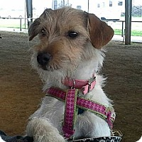 Adopt A Pet :: Reba - Houston, TX