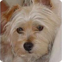 Adopt A Pet :: Diamond - West Palm Beach, FL