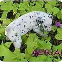 Adopt A Pet :: Aerial - League City, TX