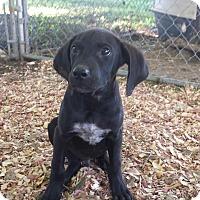 Adopt A Pet :: Waldo - Crocker, MO