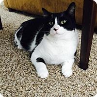 Adopt A Pet :: Biz - Acme, MI
