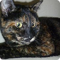 Adopt A Pet :: Hazel - Hamburg, NY