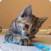 Adopt A Pet :: Cristina - Independence, MO