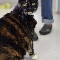 Adopt A Pet :: Libby - Santa Barbara, CA