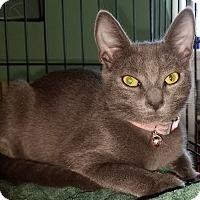 Adopt A Pet :: Rosie - Pasadena, CA
