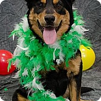 Adopt A Pet :: Babe - Saskatoon, SK