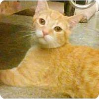 Adopt A Pet :: Pixel - Greenville, SC