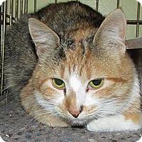 Adopt A Pet :: Echo - Acme, PA