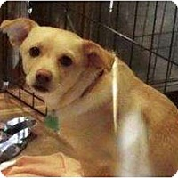 Adopt A Pet :: Zoye - Duluth, GA