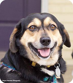 Beagle Mix Dog for adoption in Nashville, Tennessee - Charlie
