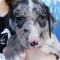 Adopt A Pet :: Jojen - Gainesville, FL