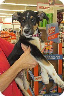 Labrador Retriever Mix Puppy for adoption in Rocky Mount, North Carolina - Pierce