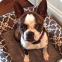 Adopt A Pet :: Luna - Jackson, TN
