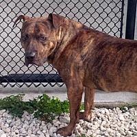 Adopt A Pet :: Cane - Pompano Beach, FL