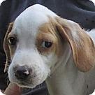 Adopt A Pet :: Carter
