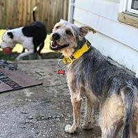 Adopt A Pet :: Keki - Winchester, VA