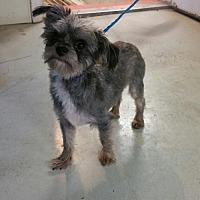 Adopt A Pet :: Yugi - Maquoketa, IA