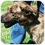 Photo 2 - Dutch Shepherd Mix Dog for adoption in Floyd, Virginia - Jenny