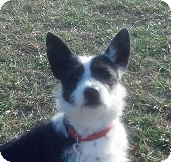 Terrier (Unknown Type, Small) Mix Dog for adoption in Portland, Maine - Logan