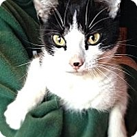 Adopt A Pet :: Pandy - Green Bay, WI