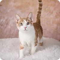 Adopt A Pet :: Vincent - Eagan, MN