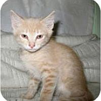Adopt A Pet :: Nicolas - Shelton, WA