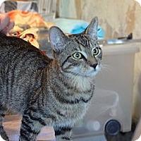 Adopt A Pet :: Salem - Brooklyn, NY